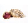 Trancio di Fiocco di Prosciutto da 1.2 Kg Circa